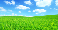 scenergy_green_field_2_thumb